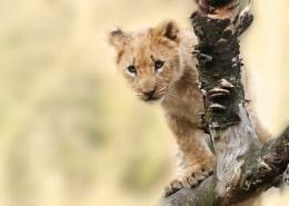 Legittimità delle opzioni put e divieto di patto leonino