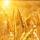 Linee Guida per il risanamento delle imprese agricole Testo dell'Informativa Allegato